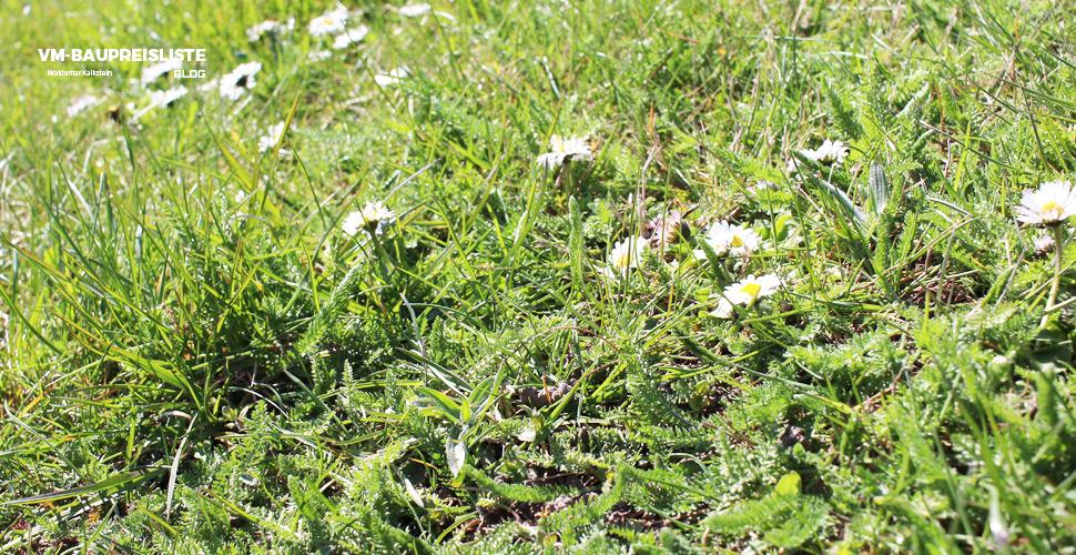 Ein Rasen